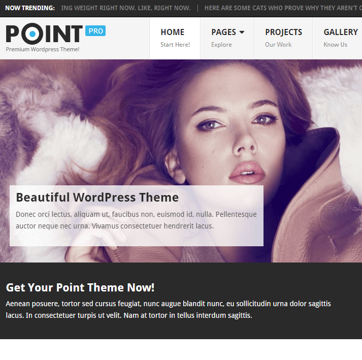 PointPro- A multipurpose WordPress theme